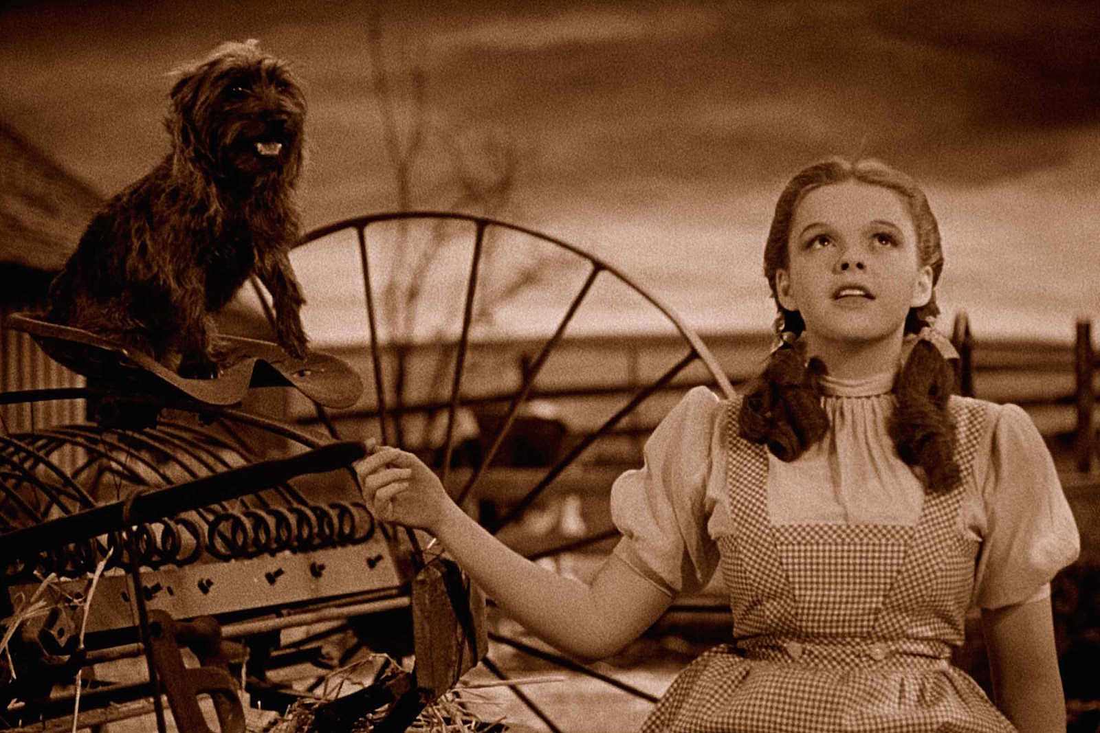 Image result for pictures of wizard of oz toto