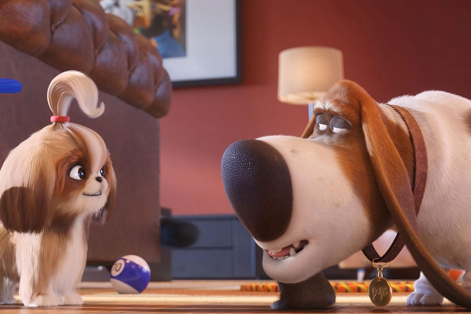 I Was Not Emotionally Prepared For 'The Secret Life of Pets 2'