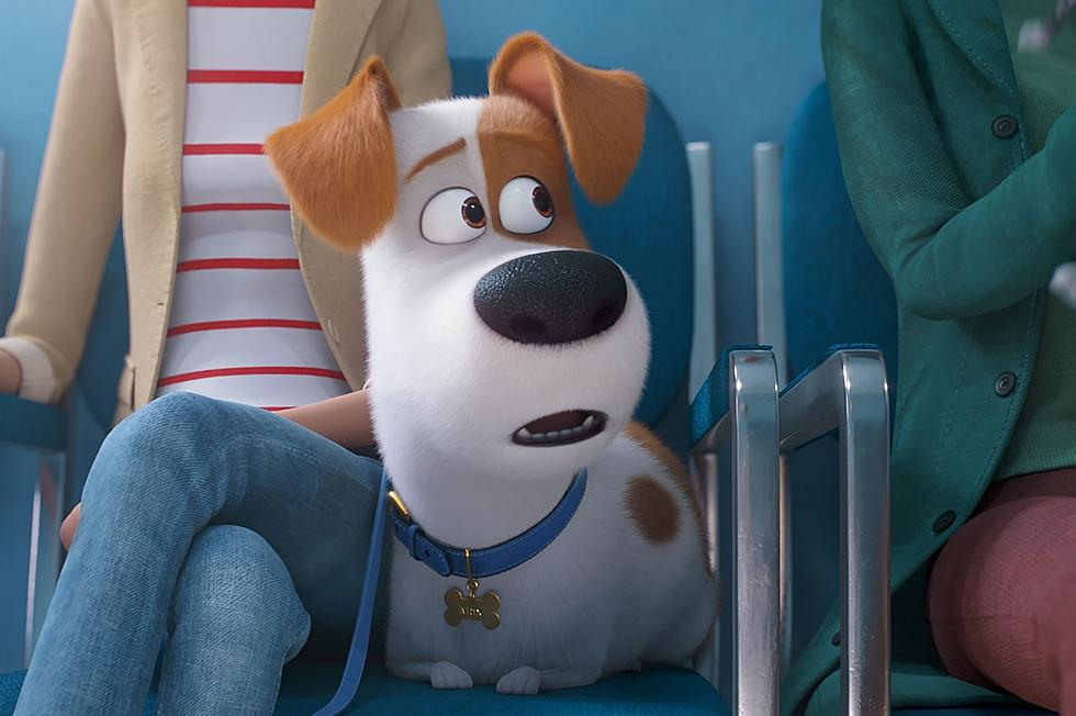 I Was Not Emotionally Prepared For The Secret Life Of Pets 2