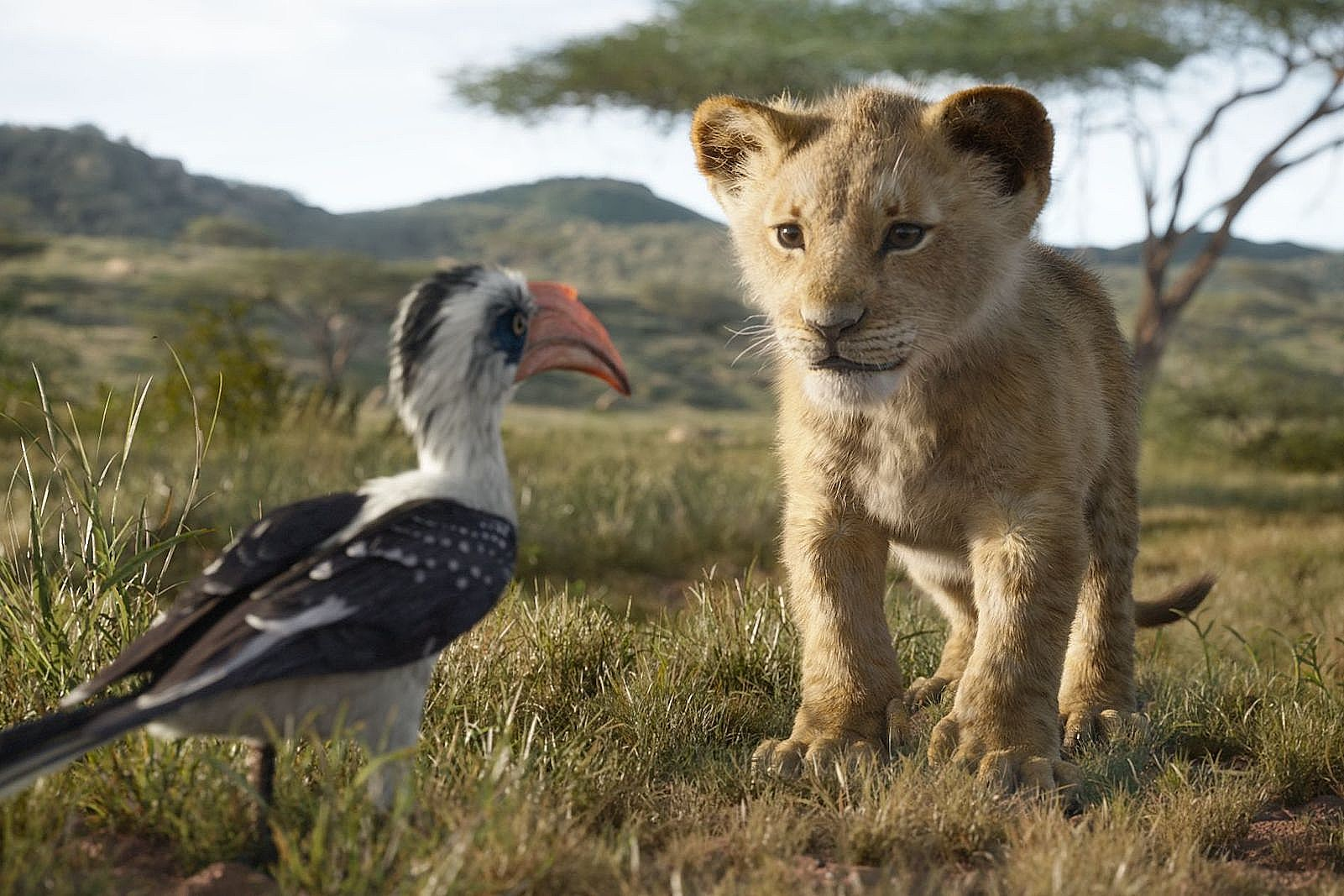 The Lion King Is Now Available On Disney