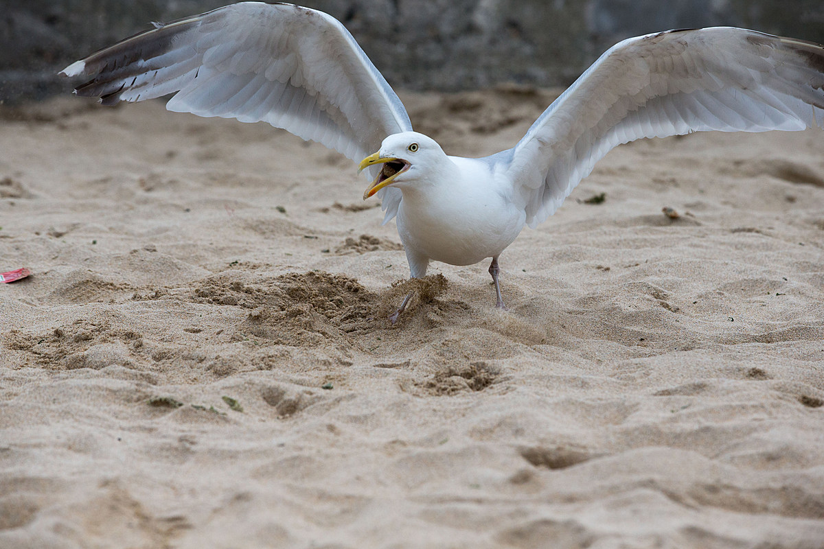 Man arrested after chasing seagulls naked on Michigan beach