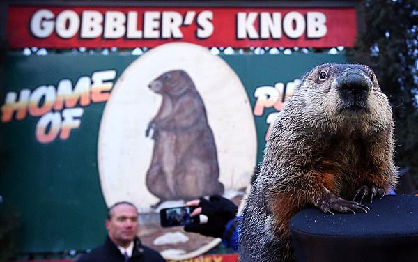 Did Punxsutawney Phil See His Shadow on Groundhog Day 2016?