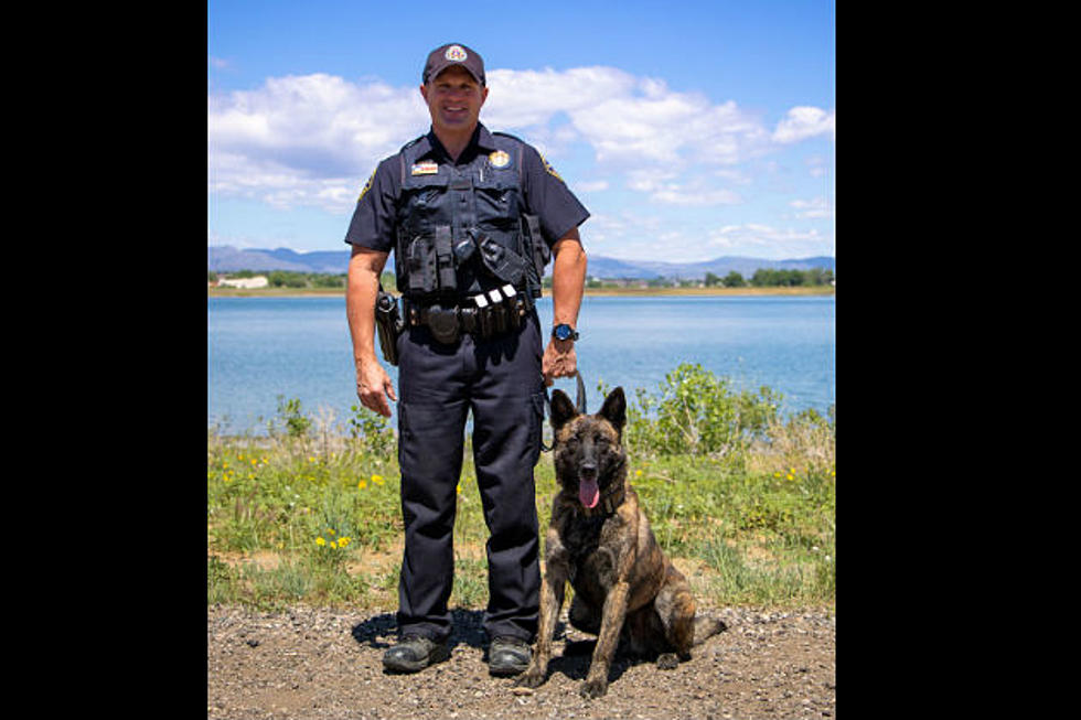 Larimer Sheriff K9 Officer Now Equipped with Body Armor