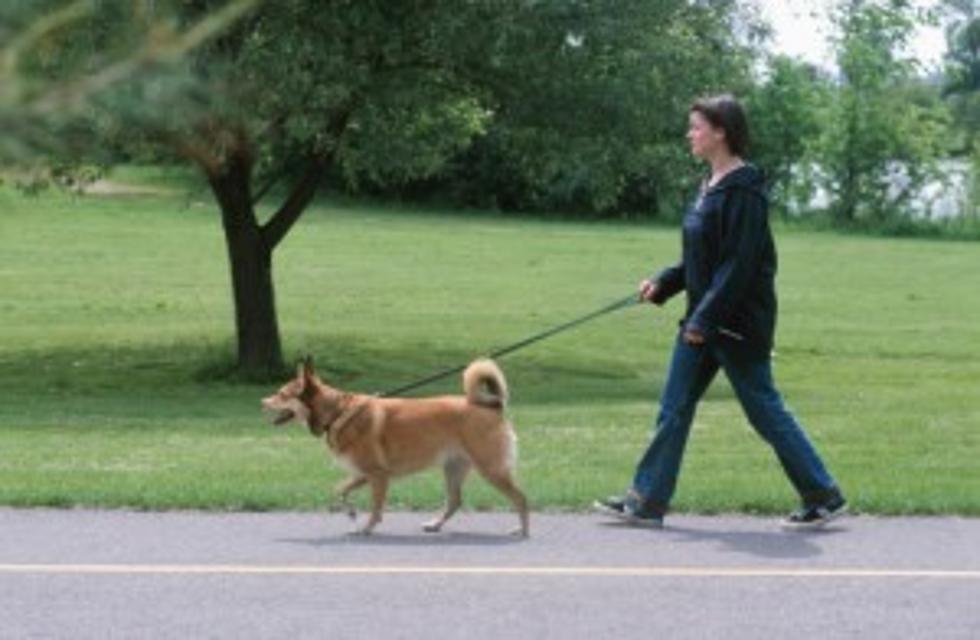 6 Pet Friendly Parks Around Binghamton