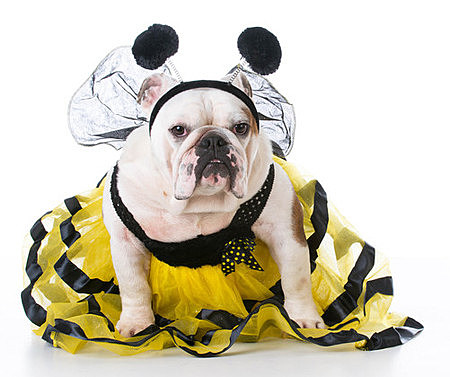 These Pets In Halloween Costumes Are Too Cute For Words