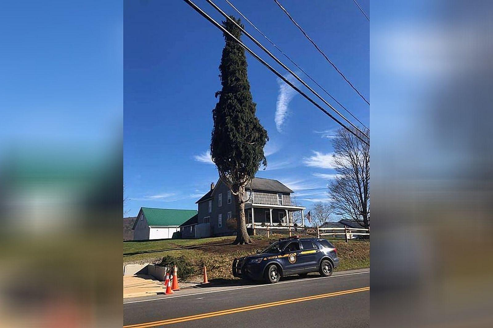 The Rockefeller Christmas Tree Arrives ...
