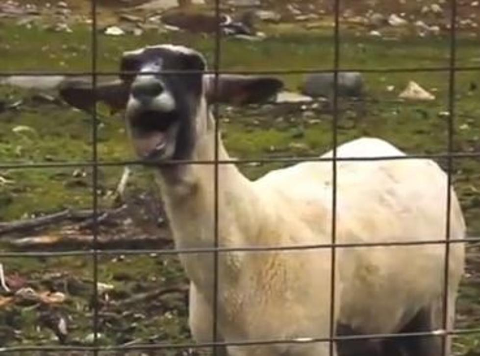 Cops Called On Screaming Goat