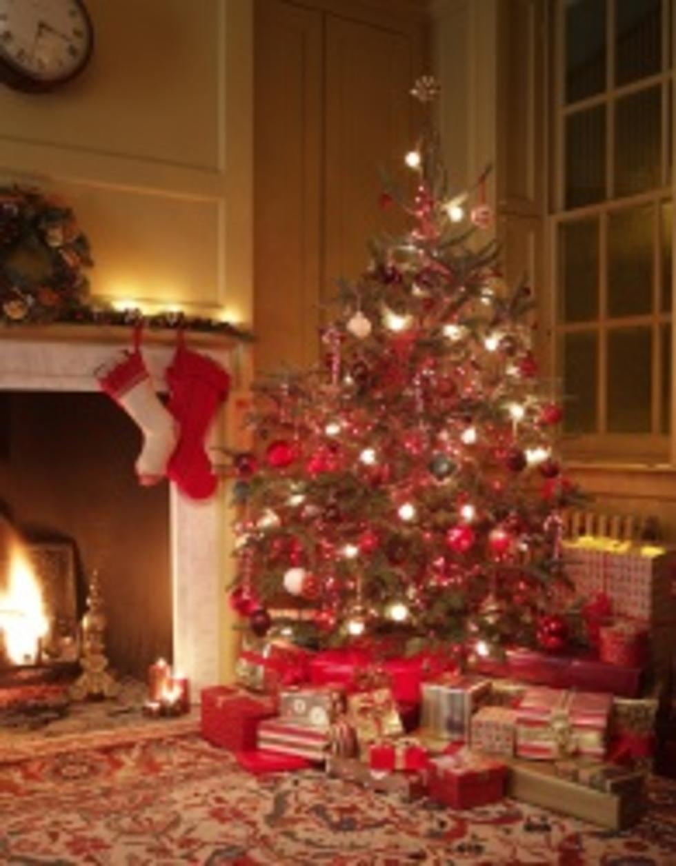 Gj Boy Scout Christmas Trees 2021 Where To Buy Fresh Cut Christmas Trees In Grand Junction