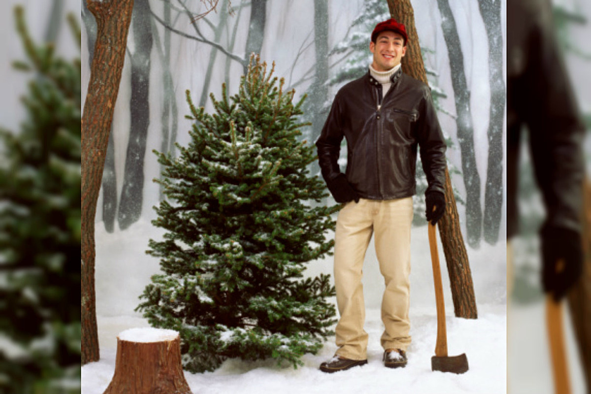 How to Get a Christmas Tree Cutting Permit in Mesa County