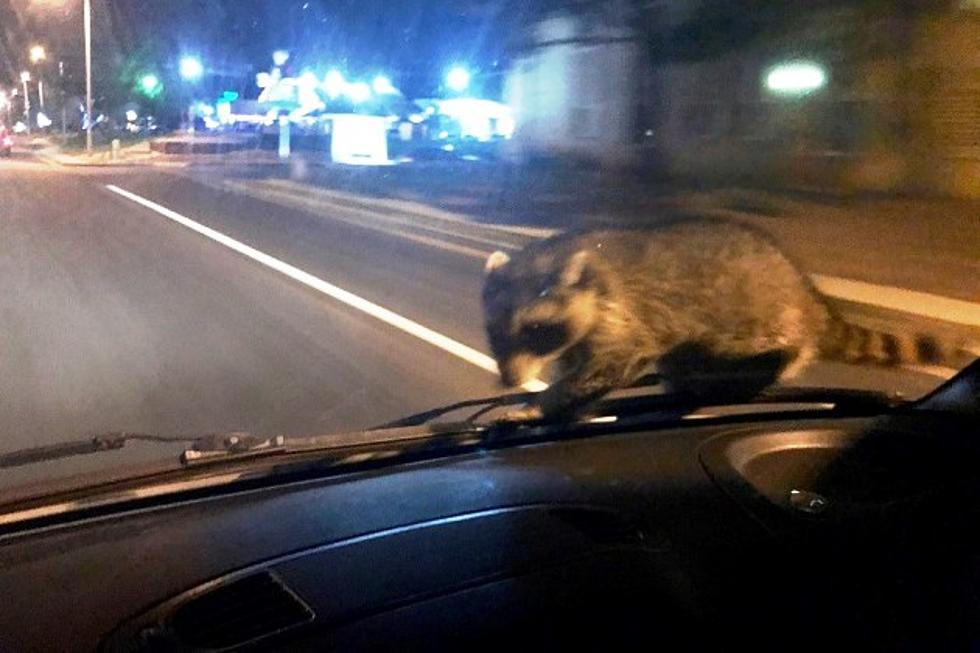 Cool Rides Of Colorado Springs >> Masked Bandit Catches Ride With Colorado Springs Police