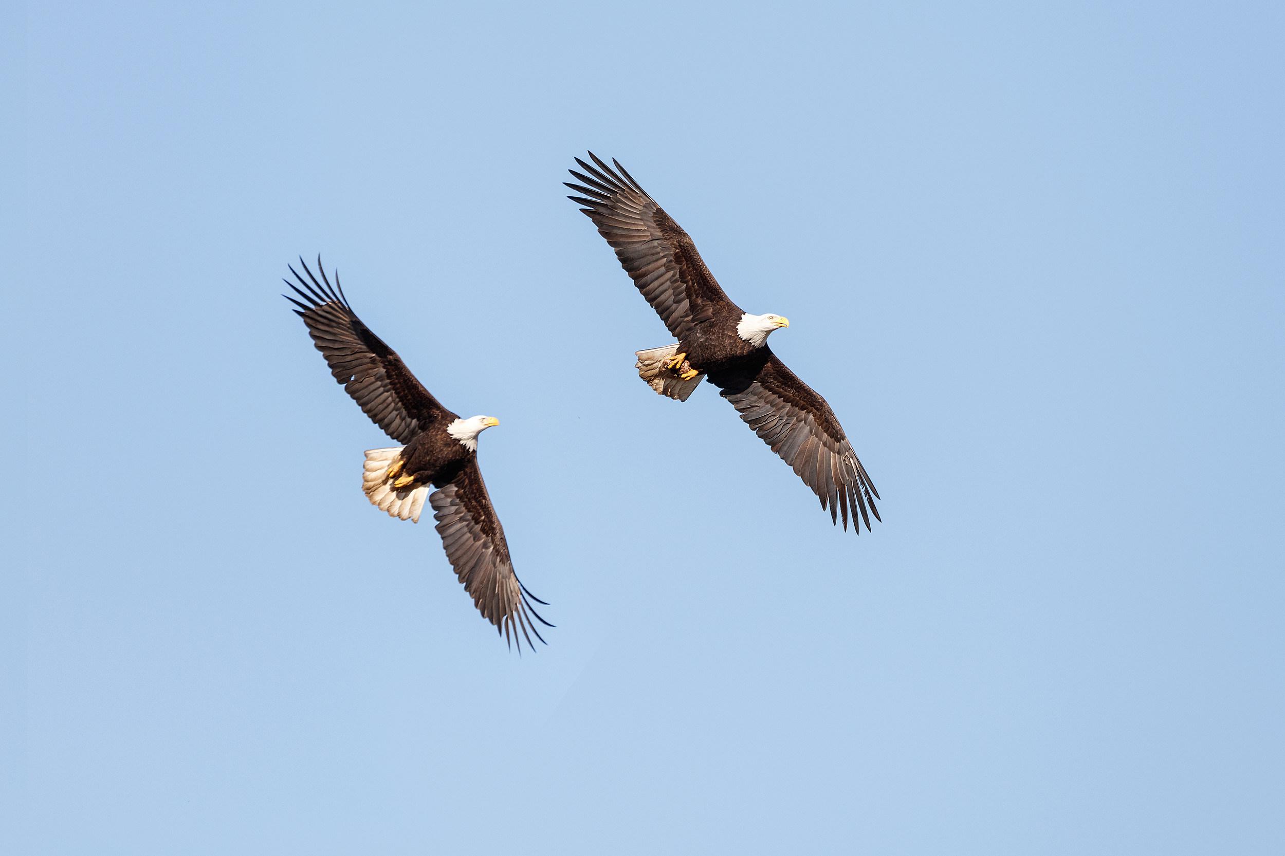 Eagle dating profiel tekst datingside