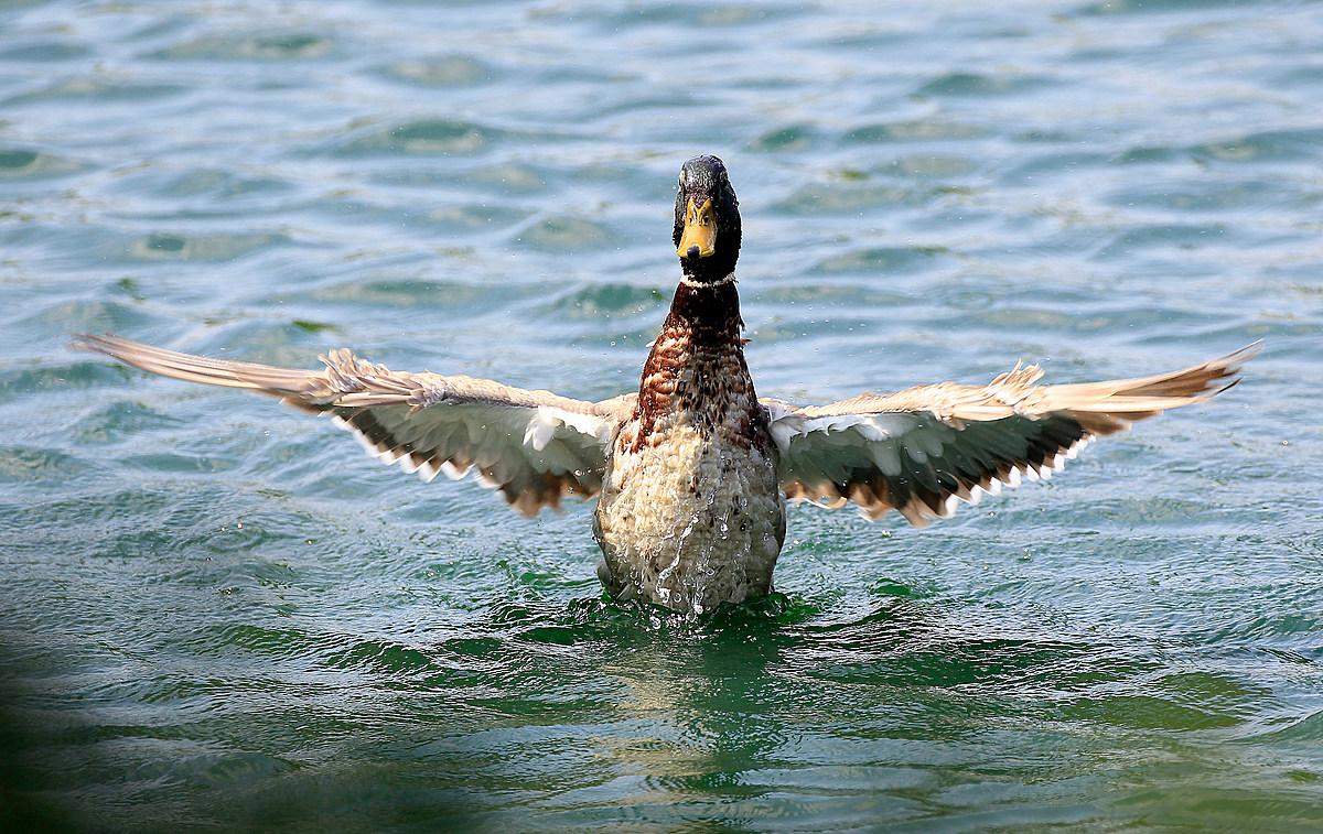Free Heart, Ice Cream and Mallard Duck: Western Slope ...