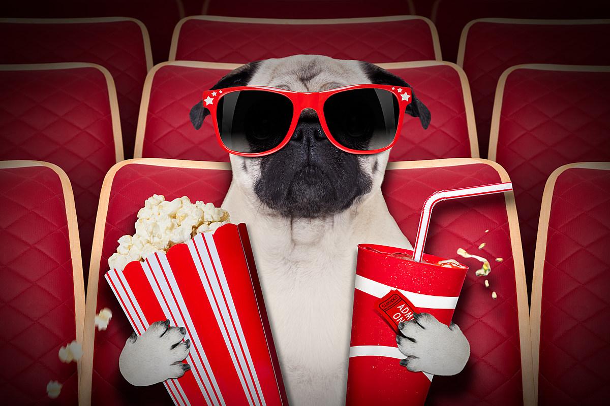 Тебя, картинка кинотеатр смешное