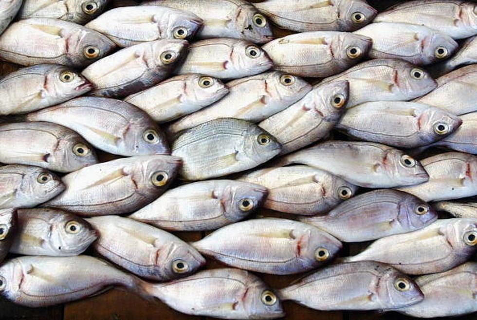 Plenty of catfish