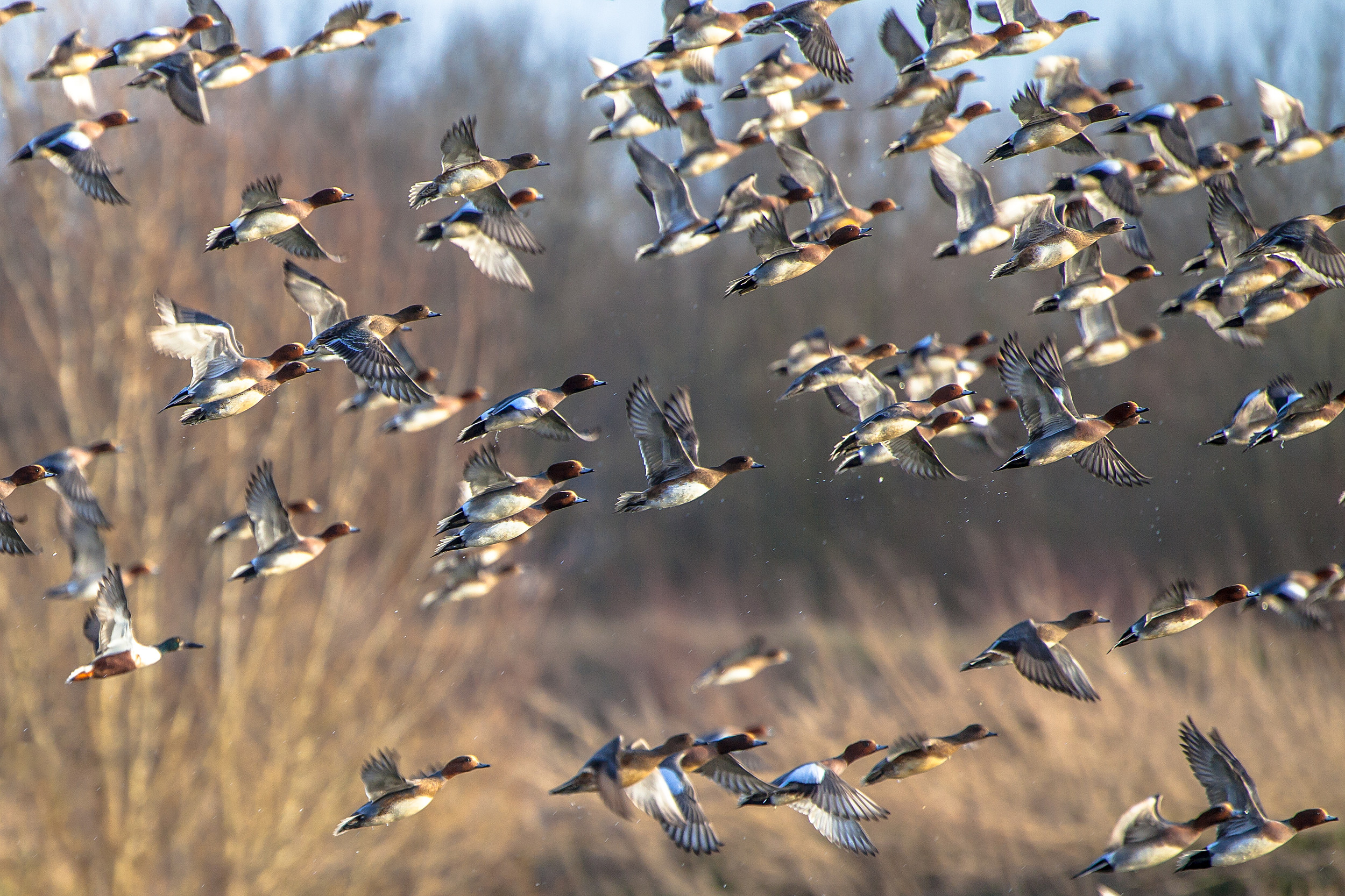 DUCKS UNLIMITED SINCE 1937 CONSERVATION FOR TODAY WETLANDS FOR TOMORROW SIGN NEW