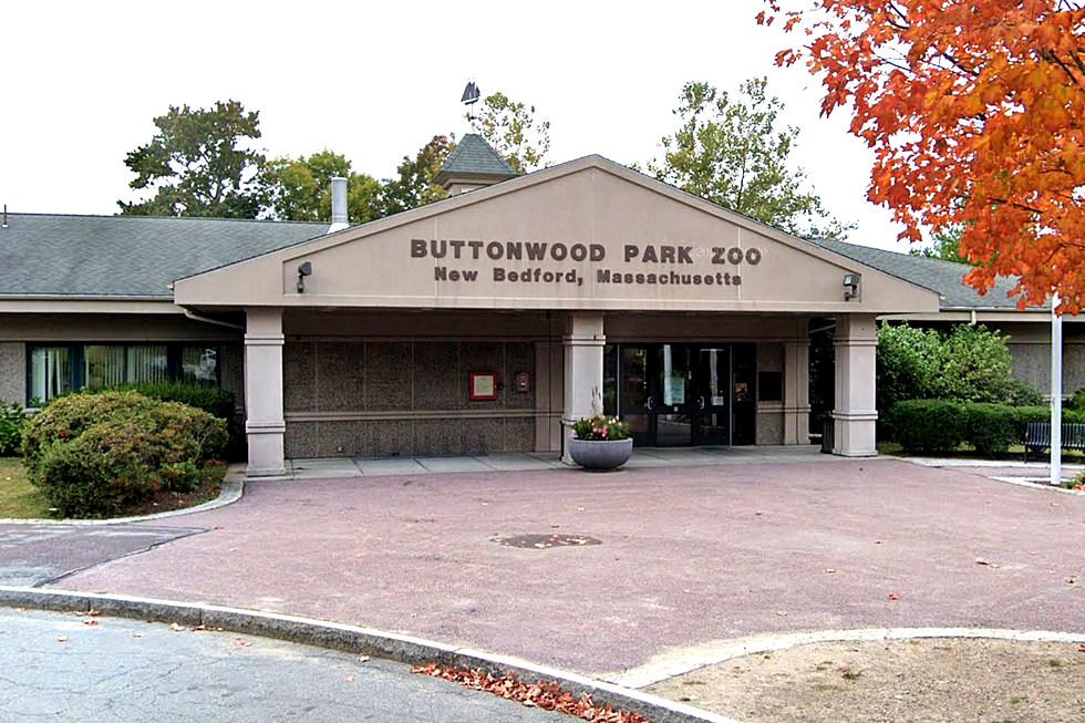 Buttonwood Park Photo