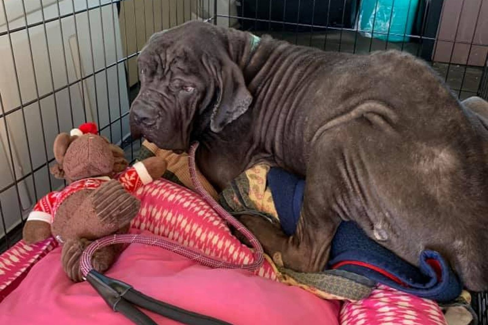 This Fall River Dog Needs a Loving Home to Spend His Final Days