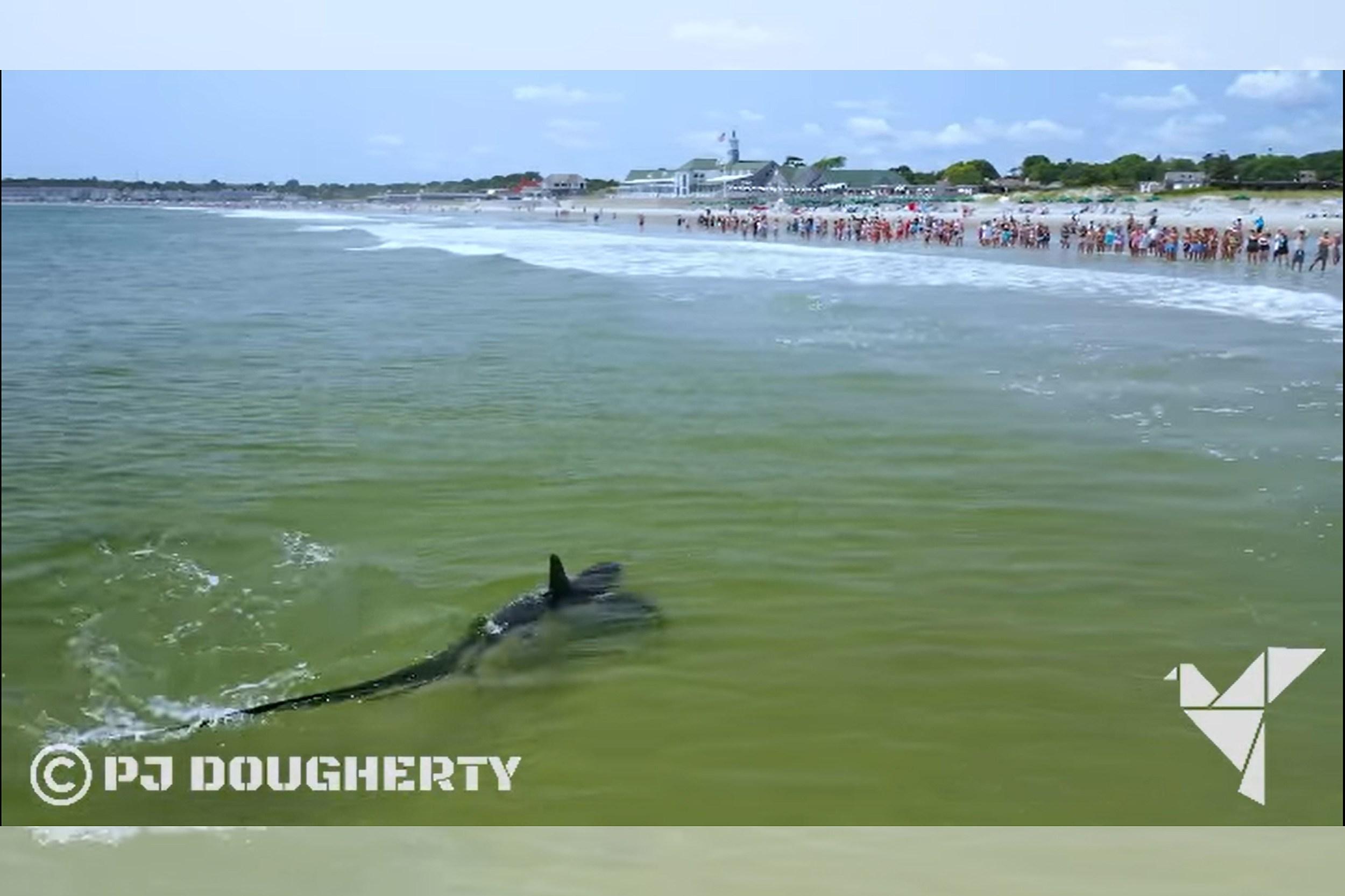 Narragansett Beach Gets Jaw-some Visitor as Shark Nears Shore