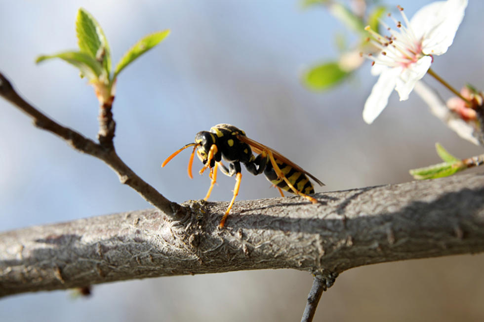 Use This DIY Trick to Get Rid of Wasps and Hornets This