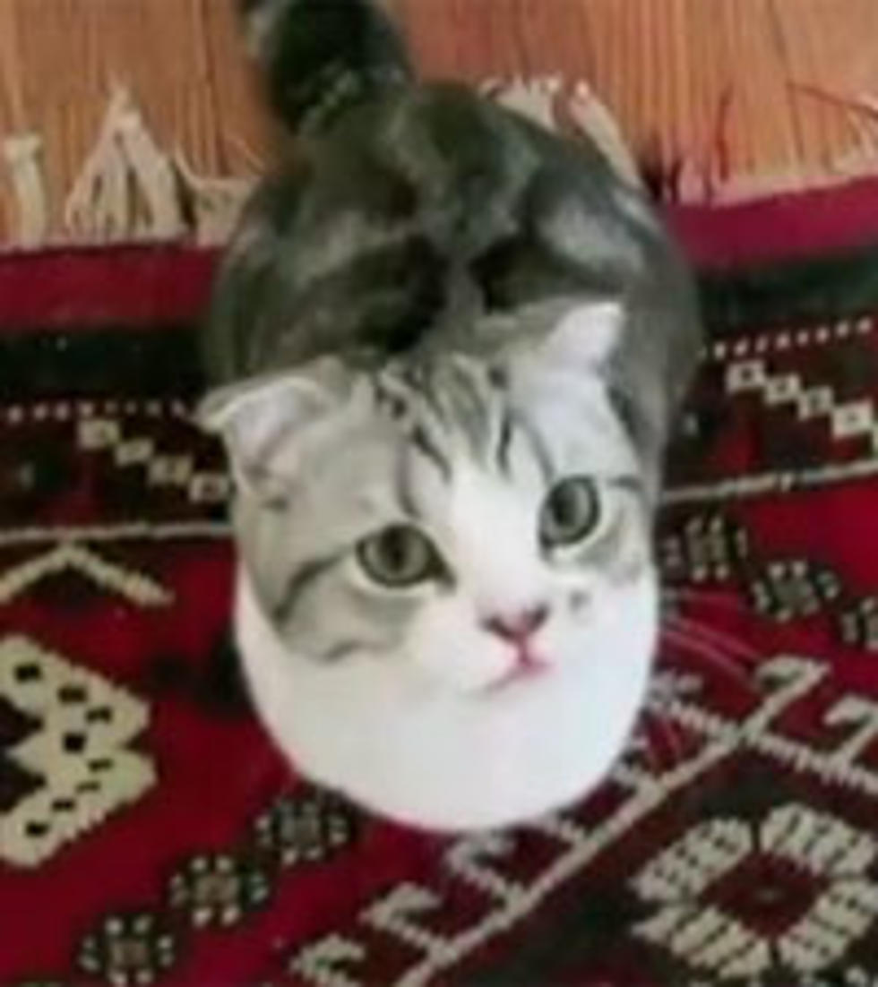 Taylor Swift S Cat Meredith Is Tops In Pop Culture