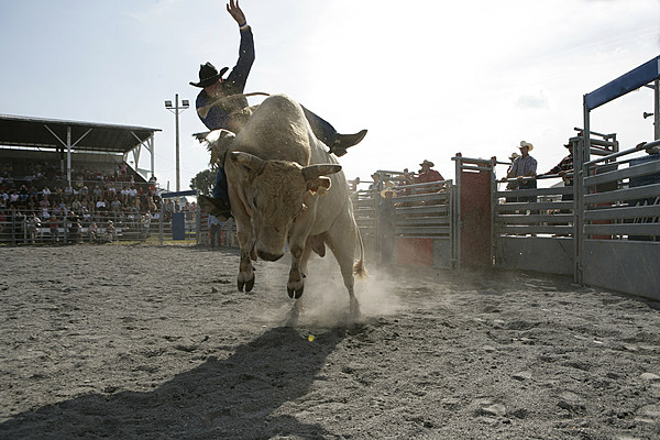 It S Clearwater Rodeo Weekend