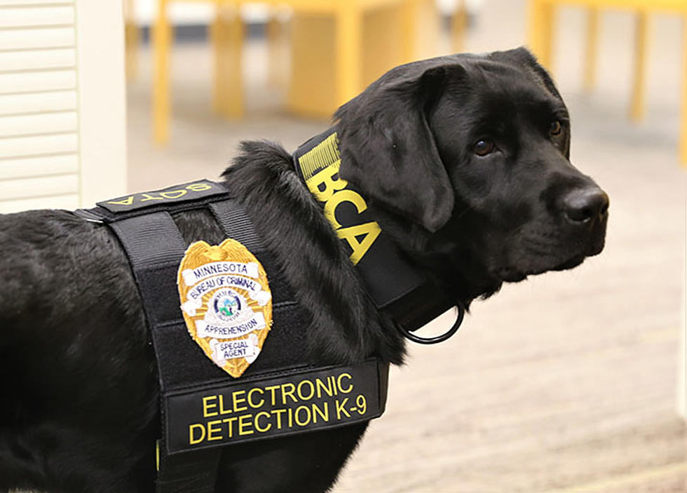 Minnesota's First Electronics Sniffing K9 is on Duty