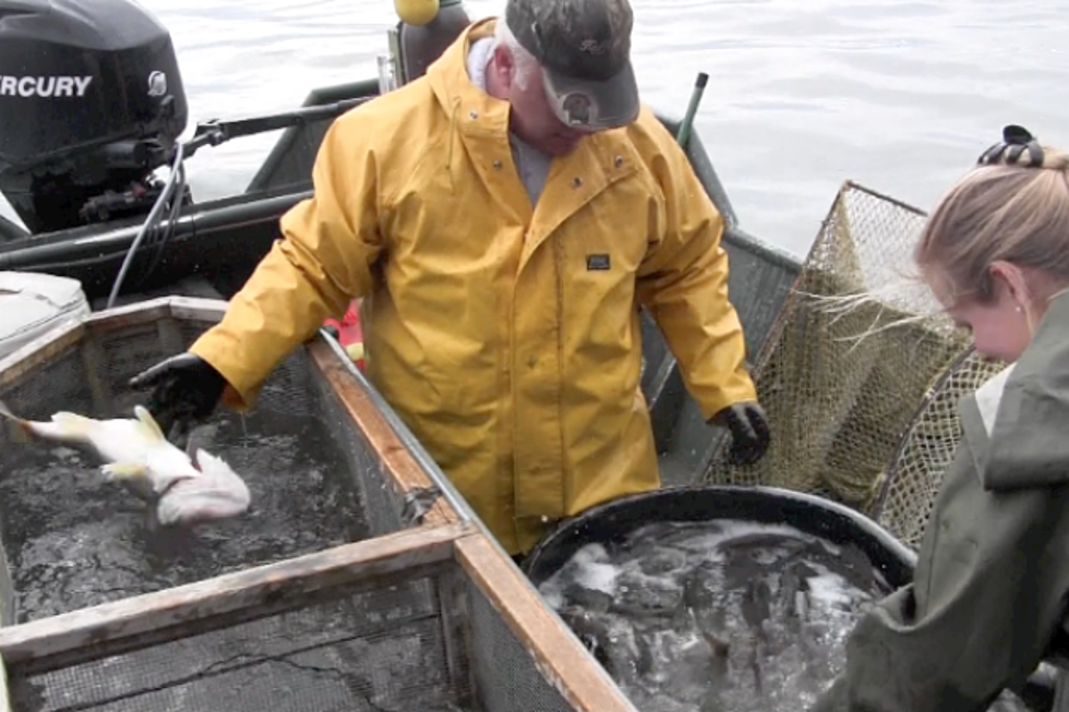 Behind the Scenes: Keeping the Fish Population Bountiful in