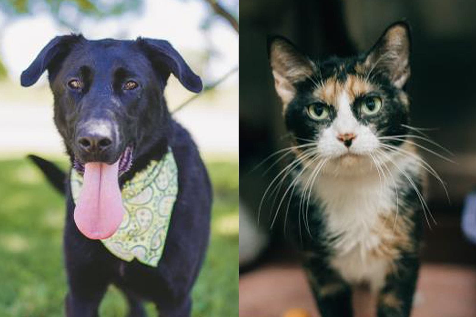 Tips For Stress-free Pets During the for 4th of July Fireworks