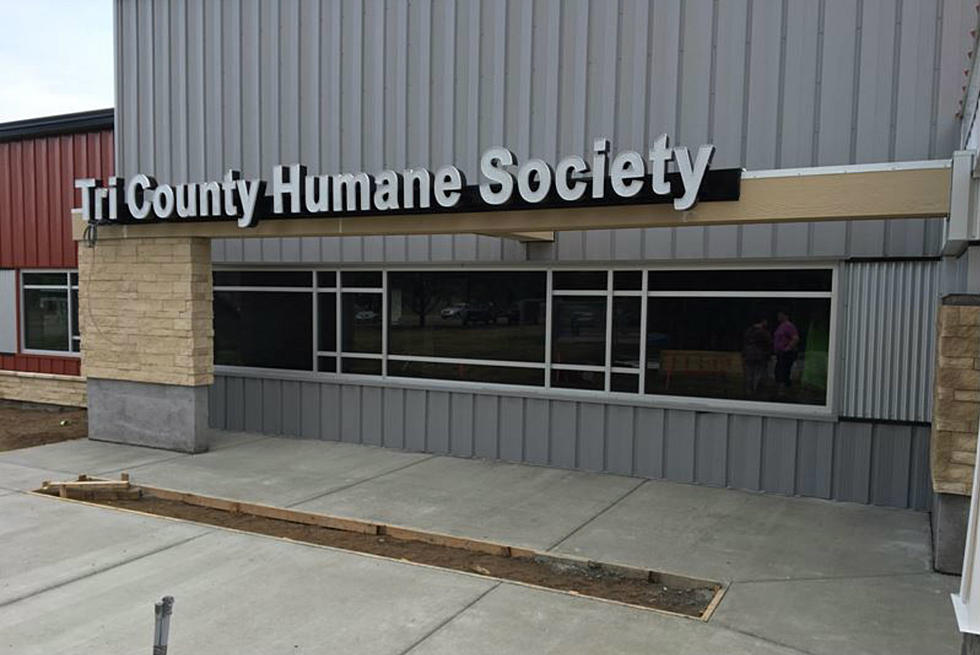 Cats Or Dogs Tri County Humane Society Wants Your Vote