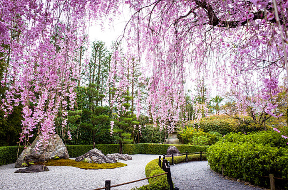 Anderson Japanese Gardens Opening Celebration Is Saturday
