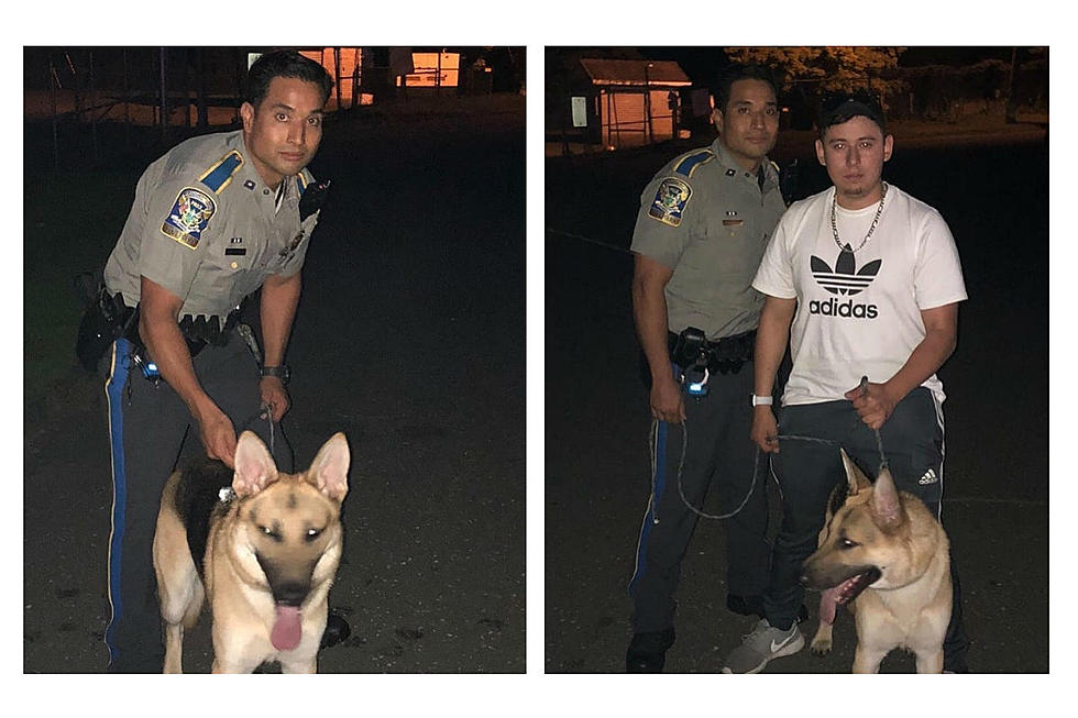 Connecticut Troopers Keep Scooby Safe on I-84 in Danbury