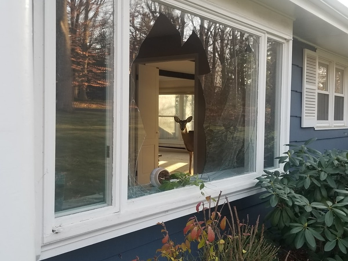Police In Connecticut Solve Thanksgiving Breaking And Entering