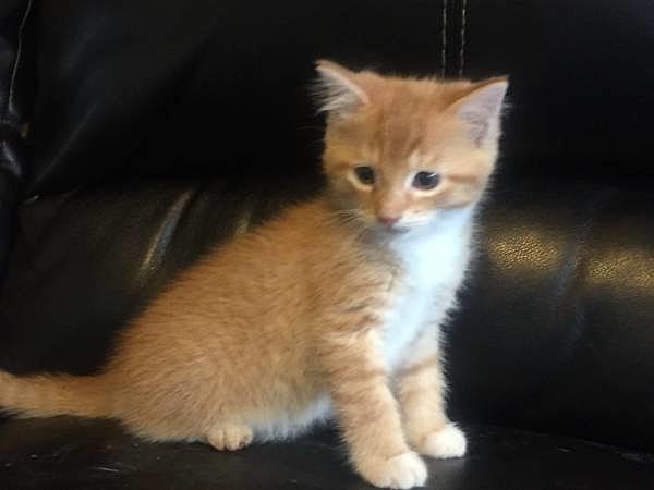 Carolina: Kittens Craigslist Mn