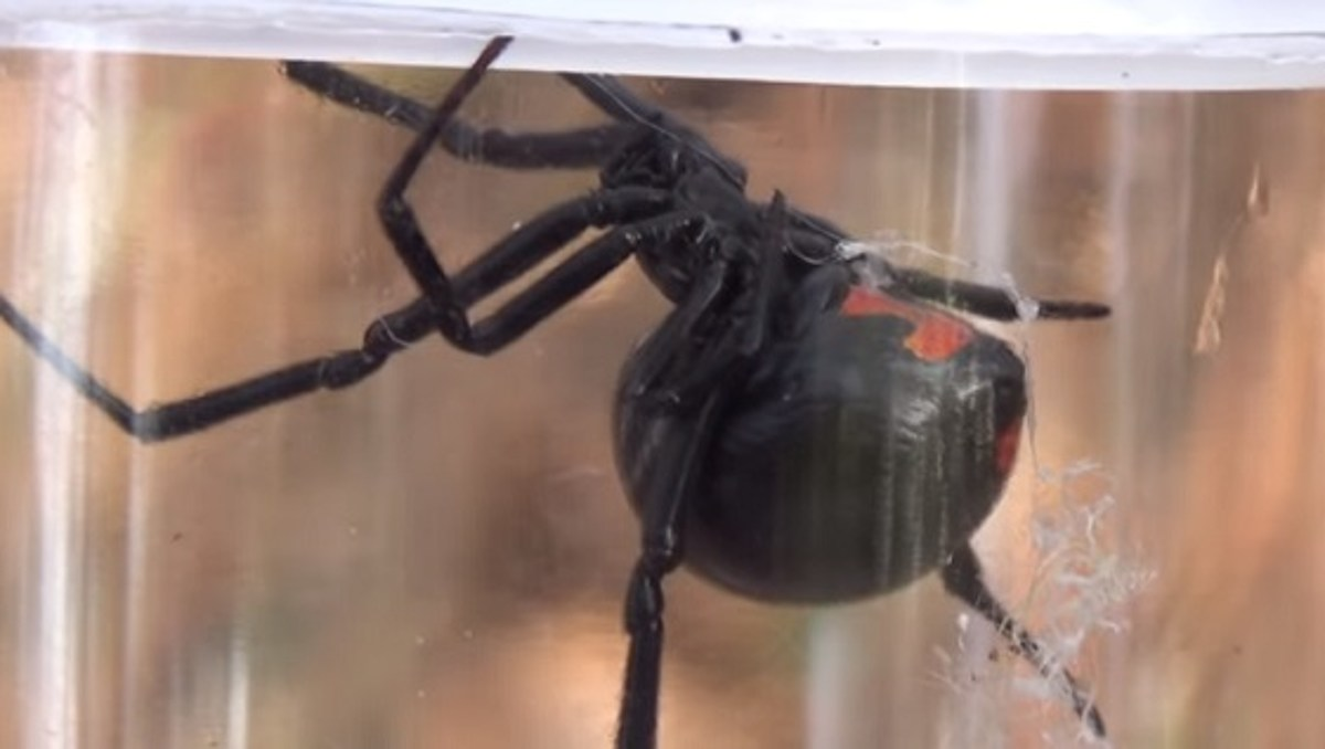 27 Spiders That Are Found In Michigan
