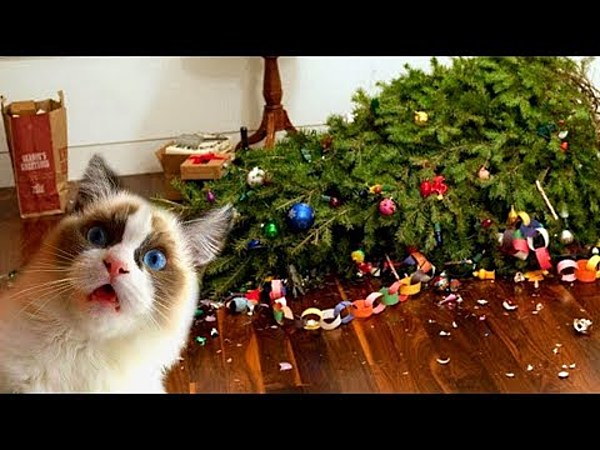VIDEO: Cats & Christmas Trees; Not Always The Best Combination