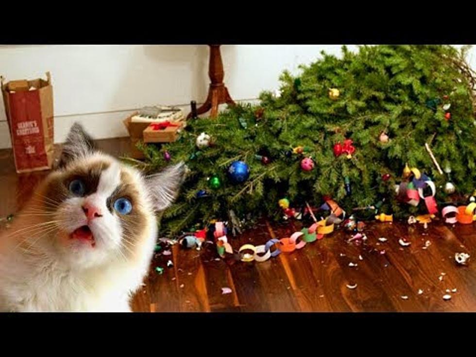 Cat Christmas.Video Cats Christmas Trees Not Always The Best Combination
