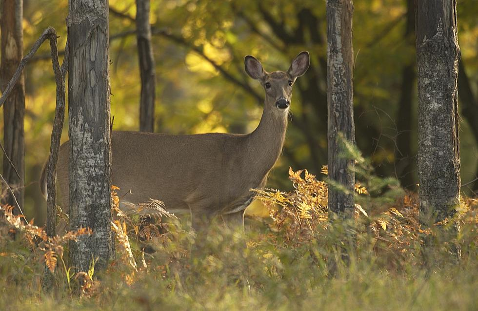 Michigan DNR Sets New Deer Hunting Regulations In Bid To