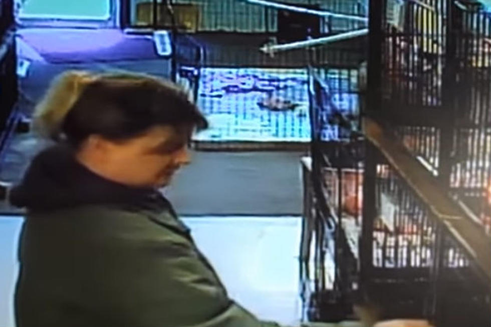 Watch Woman Steal A Puppy From Mainely Puppies