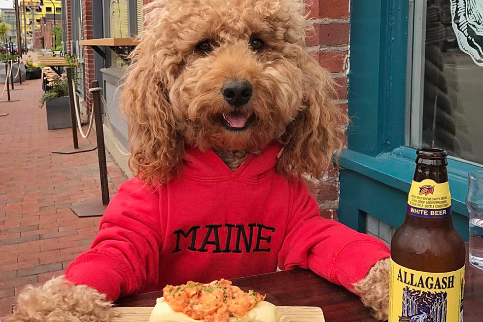 A New York City Dog Visited Maine For The Weekend And I