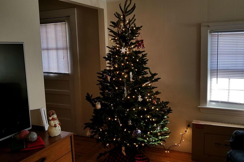 Portland Christmas Tree.Ways To Dispose Of Your Christmas Tree In Portland And L A