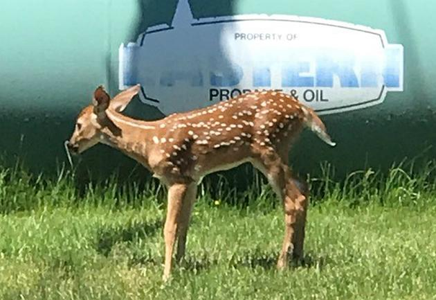 Check Out This Baby Deer Right Outside Our Studios!