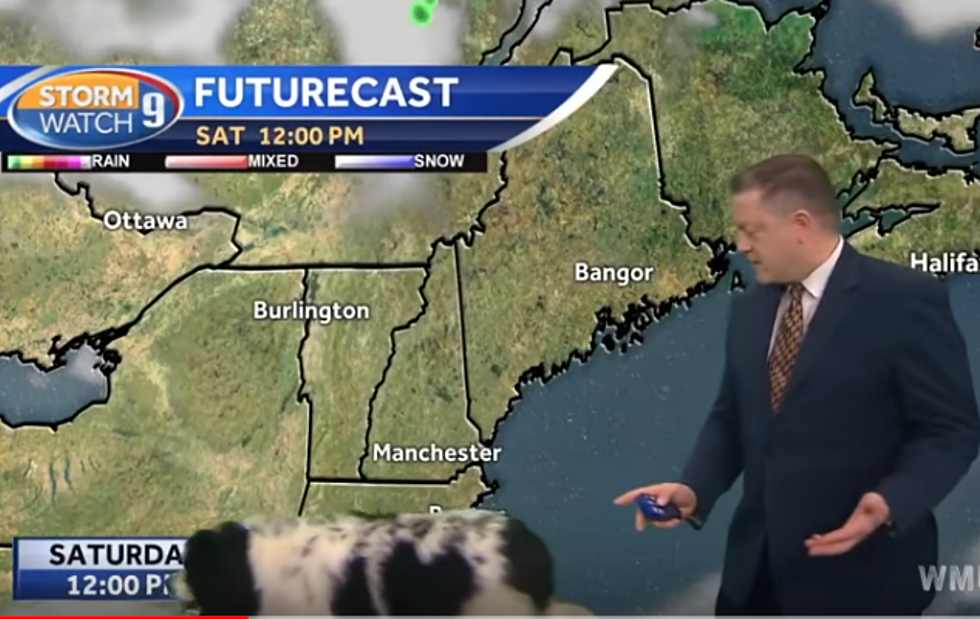 WATCH: WMUR's Josh Judge Caught Off Guard During Weather Report
