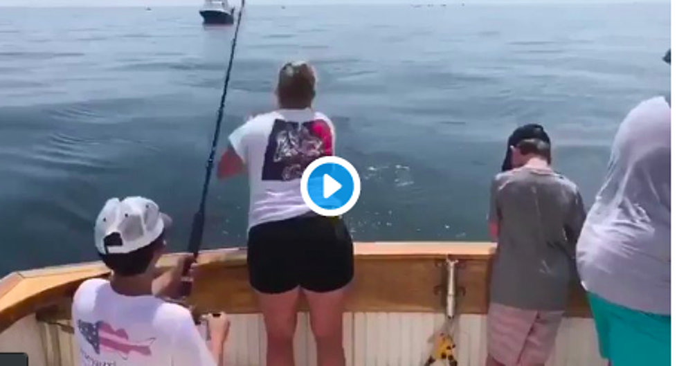 A Gigantic Great White Shark breached the water in Cape Cod Bay