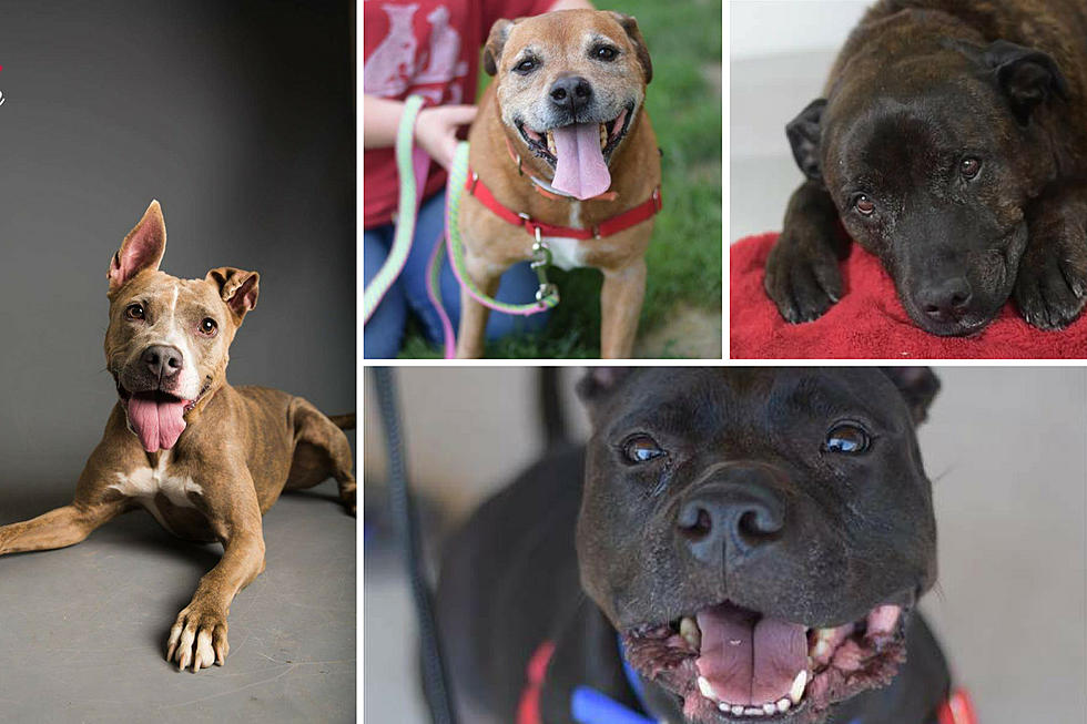 Dutchess County SPCA Holds FREE Adoption Weekend