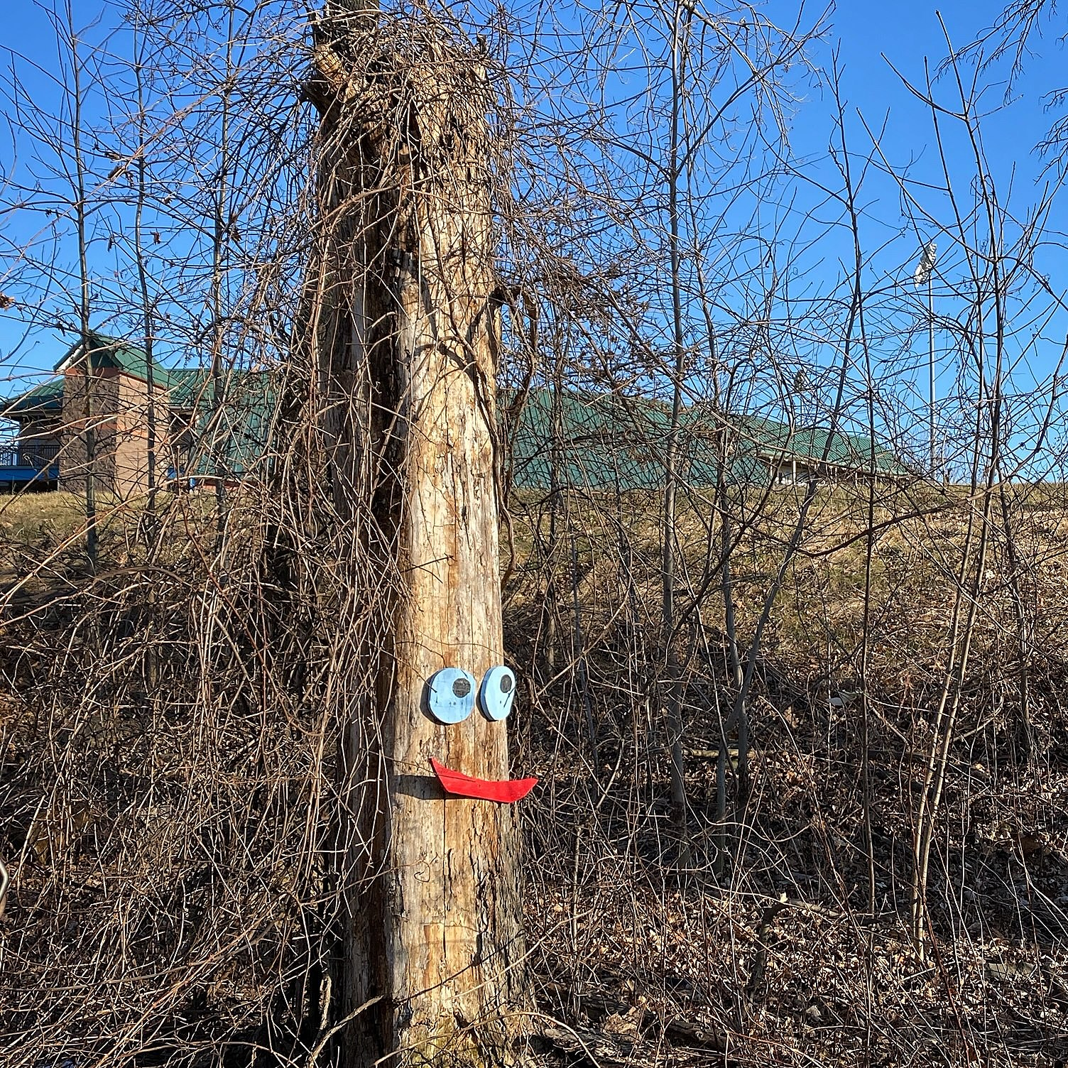 Creepy Tree Faces Arrive In Dutchess County