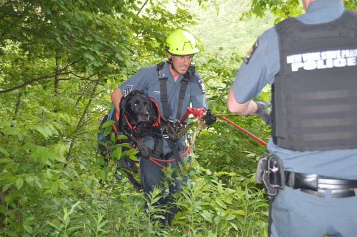 Dog Rescued After Plummeting 200 Feet at New York State Park