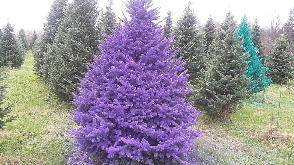 Christmas Tree Colors.Are Colored Christmas Trees Coming To The Hudson Valley