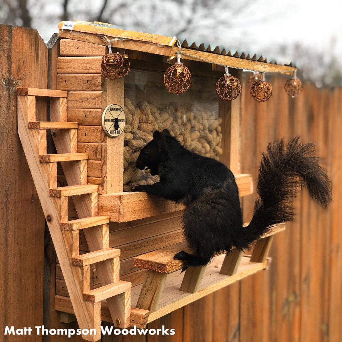 Man Builds Bar for Squirrels in His Backyard