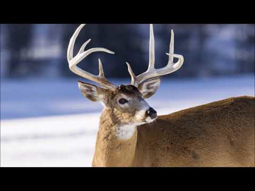 Mandatory CWD Test Starts This Weekend in SE MN
