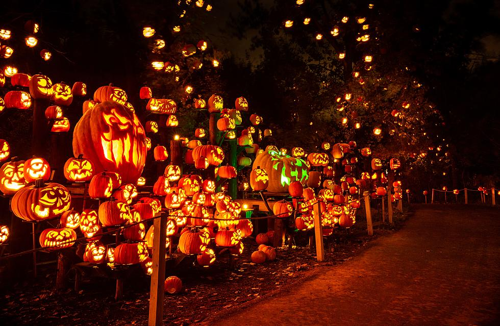 https://townsquare.media/site/719/files/2019/09/Jack-O-Lantern-Spectacular-MN-Zoo-4.jpeg?w=980&q=75